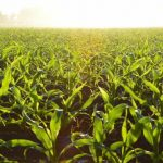Waarom is biologische voeding nog beter?