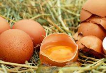 Eierdooiers en spieropbouw