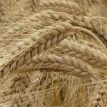 Eiwitrijke voeding - Plantaardige eiwitten